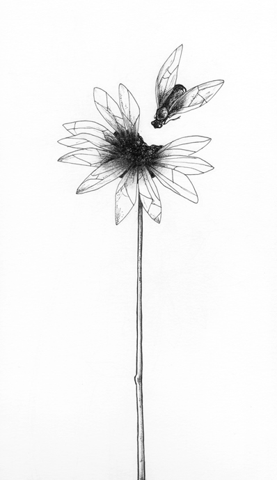 flor mosca